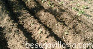 La nueva Besana Villoria